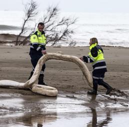 Vigili del fuoco, guardia costiera e protezione civile applicano delle barriere di contenimento a causa della fuoriuscita di cherosene dall'oleodotto dell'ENI a Palidoro, 6 novembre 2014 (ANSA/MASSIMO PERCOSSI)