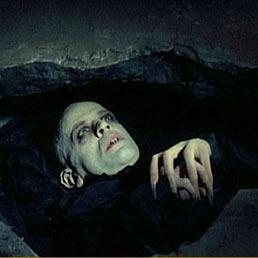 i vampiri hanno unerezione