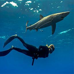 Incontri ravvicinati con gli squali all'Acquario civico di Milano