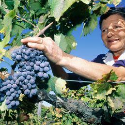 Crociata di Francia e Italia contro le «vigne libere» (Marka)