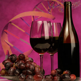 La genetica nel vino: il Dna è garante della biodiversità