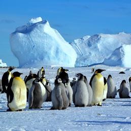 Diario dal Polo Sud: come spiegare agli alunni perché qui non ci sono orsi