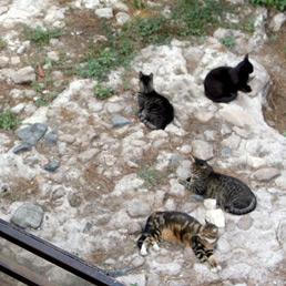 A Roma allarme sfratto per i gatti di Largo Argentina (Olycom)