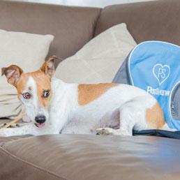 PetSharing, nasce community online per limitare abbandono animali