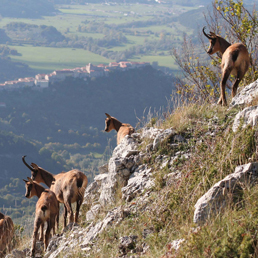 www.naturaitalia.it