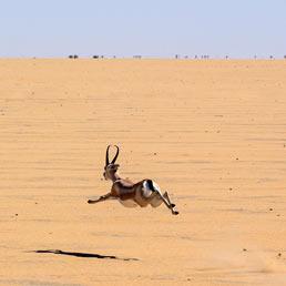 Il Sahel è una vasta area geografica che attraversa l'Africa da un capo all'altro, toccando una decina di paesi lungo la sua sterminata fascia desertica. (Corbis)