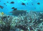 Australia: bloccata miniera che minaccia la Barriera corallina